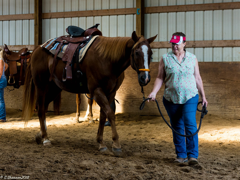 Rolling Hill Equine-6420