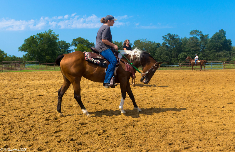 Teaching a horse to back up.