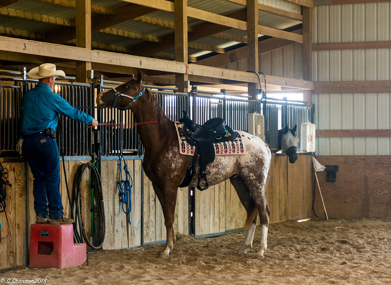 Teaching a horse to come to a mounting block.