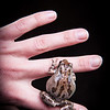 SNC-animals-1220_proof