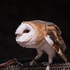 SNC-animals-1543_proof