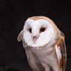 SNC-animals-1555_proof