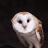 SNC-animals-1553_proof