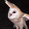 SNC-animals-1557_proof
