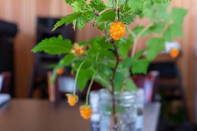 Salmonberry-07122018-025-BrokenBanjo
