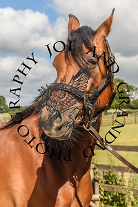 The pictures from the session with Charlie (the horse) and Laura are fantastic. Joe and Clive did so well to capture the magic between Charlie and Laura. - Angela Melrose