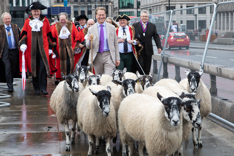 Portillo leads Sheep London Bridge Drive
