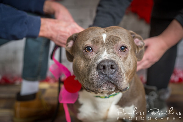 Animal Shelter Dogs-14