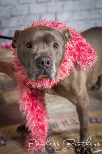 Animal Shelter Dogs-11