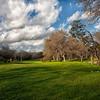 Custer's Meadow