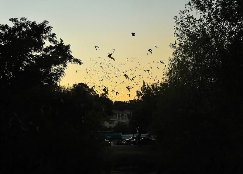 West 9th Street Bats