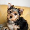 PuppyLove-4573