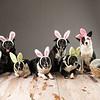 Bunnies-7259