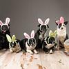 Bunnies-7256