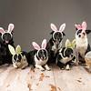 Bunnies-7257