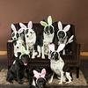 Bunnies14-8655