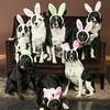 Bunnies14-8660