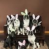 Bunnies14-8657