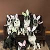 Bunnies14-8656