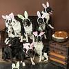 Bunnies14-8666