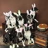 Bunnies14-8667