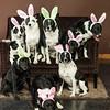 Bunnies14-8658