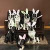 Bunnies14-8651