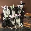Bunnies14-8671