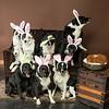 Bunnies14-8669