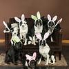 Bunnies14-8648