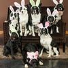 Bunnies14-8661