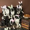 Bunnies14-8665