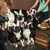Bunnies14-8662