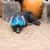 Halloween2014-2-42