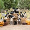 Halloween2014-2-3