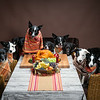 ThanksgivingWestern-8293