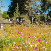 Flora - Wildflowers 2015-8470
