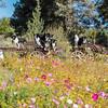 Flora - Wildflowers 2015-5011