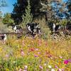 Flora - Wildflowers 2015-5015