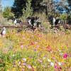 Flora - Wildflowers 2015-5020