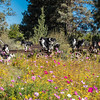 Flora - Wildflowers 2015-5000