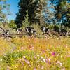 Flora - Wildflowers 2015-8465
