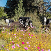 Flora - Wildflowers 2015-5008