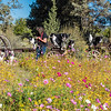 Flora - Wildflowers 2015-4995