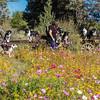 Flora - Wildflowers 2015-4997