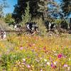 Flora - Wildflowers 2015-5023