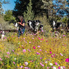 Flora - Wildflowers 2015-4994