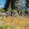 Flora - Wildflowers 2015-5004