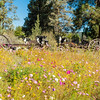 Flora - Wildflowers 2015-8472