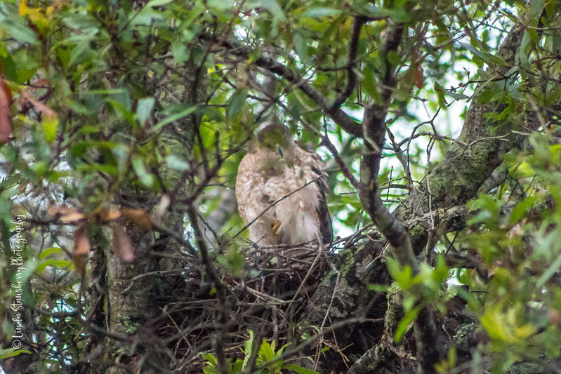 030-Hawk Watch AE Day 19